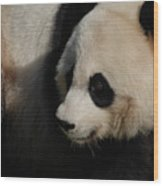 Really Up Close With The Face Of A Giant Panda Wood Print