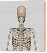 Rear View Of Human Skeletal System Wood Print