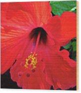 Reb Hibiscus Flower Wood Print