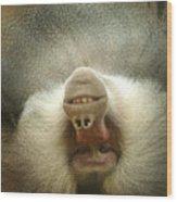 Reclining Baboon Wood Print