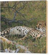 Reclining Cheetah 2 Wood Print