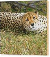 Reclining Cheetah Wood Print