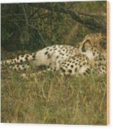 Reclining Cheetah Profile Wood Print