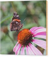 Red Admiral 1543 Wood Print