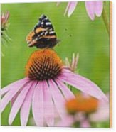 Red Admiral And Cone Flowers Wood Print