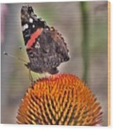Red Admiral Butterfly On Coneflower              July              Indiana Wood Print