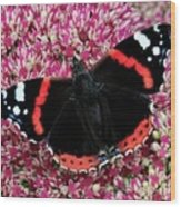 Red Admiral Butterfly Vanesa Atalanta Wood Print