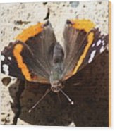 Red Admiral Close Wood Print