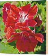 Red Amaryllis At Pilgrim Place In Claremont-california Wood Print