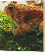 Red American Toad Wood Print
