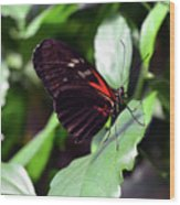 Red And Black Butterfly In The Garden Wood Print