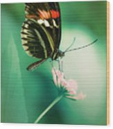 Red And Black Butterfly On White Flower Wood Print