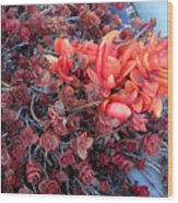 Red And Burgundy Succulent Plants Wood Print