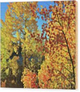 Red And Golden Aspens In Dillon Co Wood Print