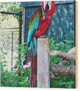 Red  And  Green Macaw         Zoo      Indiana Wood Print