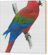 Red And Green Macaw Wood Print