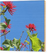 Red And Green San Diego Flowers Wood Print
