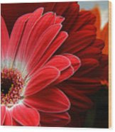 Red And Orange Florals Wood Print