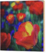 Red And Orange Tulips Wood Print