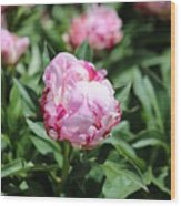 Red And Pink Peony Wood Print