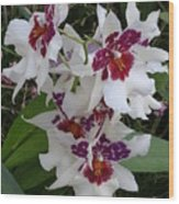 Red And Purple Orchids Wood Print