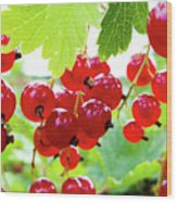 Red And Ripe Wood Print