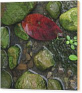Red And Rocks Wood Print