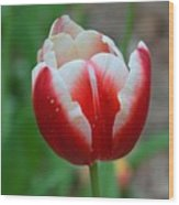 Red And White Bloom Wood Print