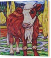 Red And White Bull Calf Wood Print