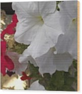 Red And White Petunias Wood Print