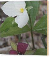 Red And White Trillium Wood Print