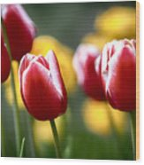 Red And White Tulips Large Canvas Art, Canvas Print, Large Art, Large Wall Decor, Home Decor Wood Print