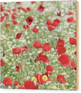 Red And White Wild Flowers Spring Scene Wood Print