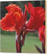 Red And Yellow Asiatic Lilies Wood Print