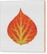 Red And Yellow Aspen Leaf 10 Wood Print