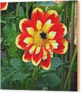 Red And Yellow Flower With Bee Wood Print