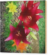Red And Yellow Garden Flowers Wood Print
