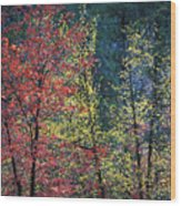 Red And Yellow Leaves Abstract Horizontal Number 1 Wood Print