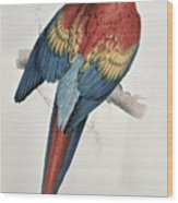 Red And Yellow Macaw  Wood Print