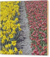 Red And Yellow Tulip Fields Wood Print