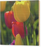 Red And Yellow Tulips Closeup Wood Print