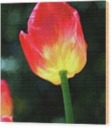 Red And Yellow Tulip - Photopainting Wood Print
