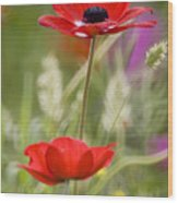Red Anemone Coronaria In Nature Wood Print