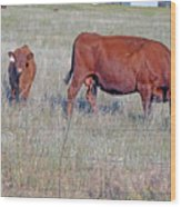 Red Angus Cow And Calf Wood Print