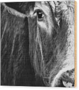 Red Angus In Black And White  Wood Print