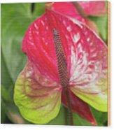 Red Anthurium Flower Wood Print