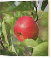 Red Apple On A Tree Wood Print