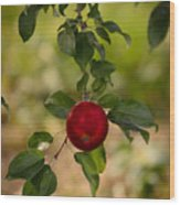 Red Apple Ready For Picking Wood Print
