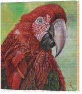 Red  Ara Chloropterus Macaw Wood Print