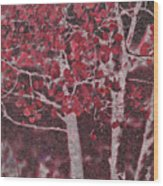 Red Aspen Wood Print